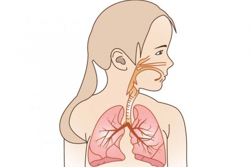 Đặc điểm hệ hô hấp trẻ em