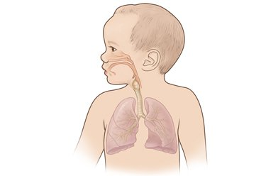 hệ hô hấp trẻ