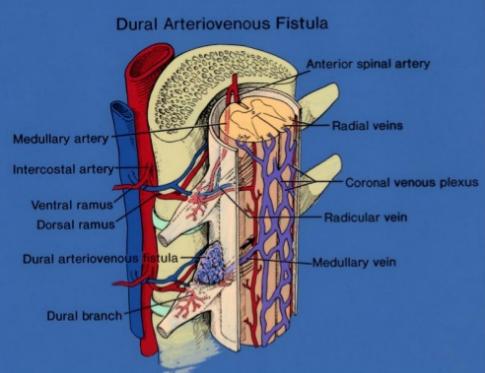 Giải phẫu mạch máu tủy