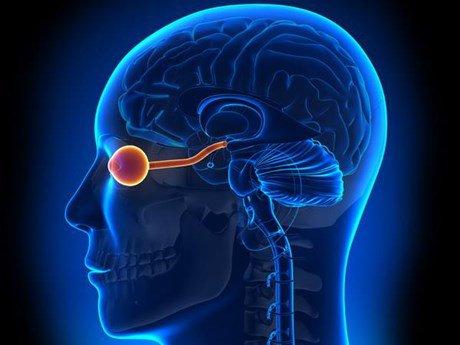 phổ viêm tủy thị thần kinh