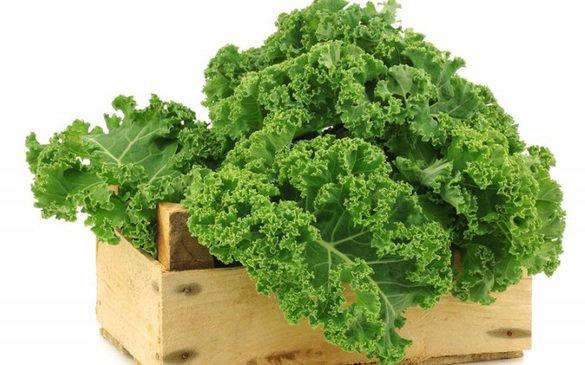Rau cải xoăn rất giàu vitamin và chất xơ | Vinmec