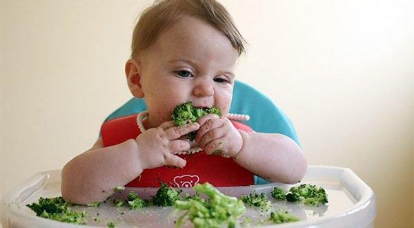 Ăn dặm cho bé chỉ huy là cho bé ăn thức ăn bằng tay và để trẻ tự ăn ngay từ đầu