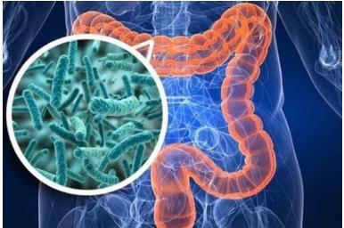 Hệ vi khuẩn đường ruột đóng vai trò quan trong trong bệnh viêm ruột