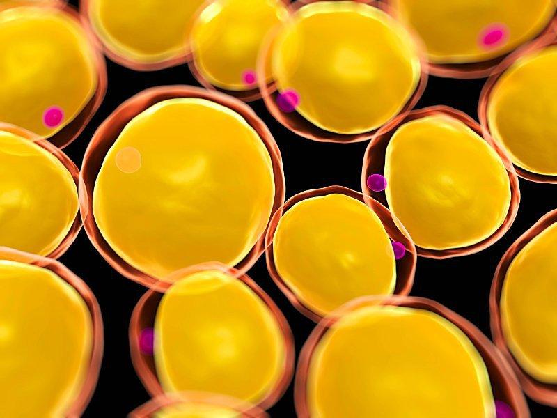 tế bào gốc trung mô mô mỡ