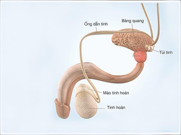 Không có tinh trùng đã mổ tắc ống dẫn tinh và sinh thiết tinh hoàn có mổ lần hai được không?