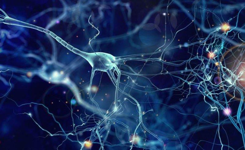 thần kinh 1