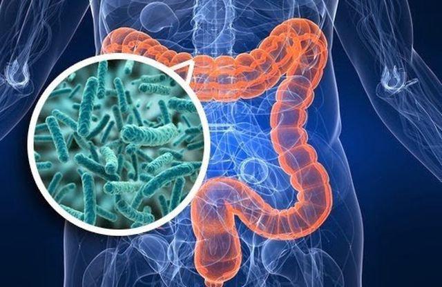 Hệ vi sinh vật đường ruột