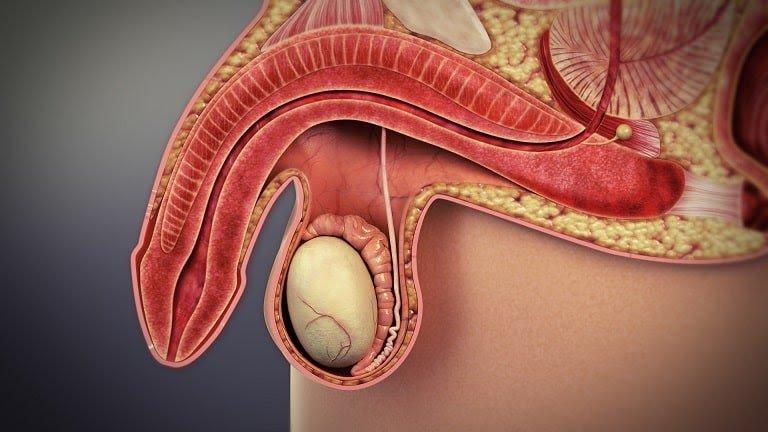 Yếu sinh lý kèm liệt dương có chữa được không?