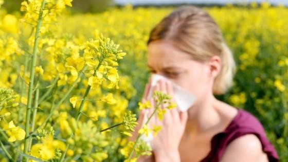 Dị ứng phấn hoa: Phân loại, triệu chứng và điều trị