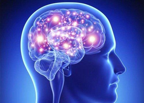 bộ não người