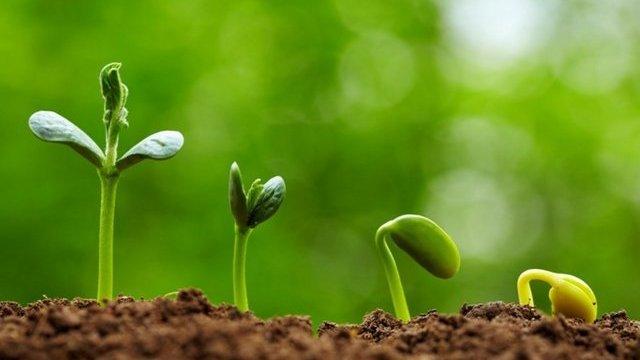 Hạt nảy mầm là gì? Dinh dưỡng và lợi ích