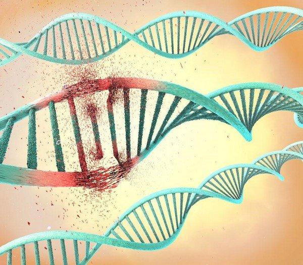 giải trình tự gen