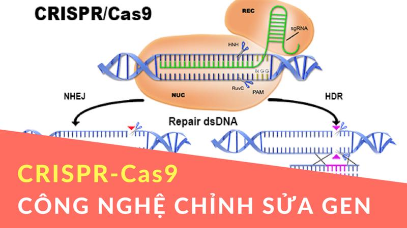 Cập nhật các thử nghiệm lâm sàng về chỉnh sửa gen bằng công nghệ CRISPR/Cas năm 2021