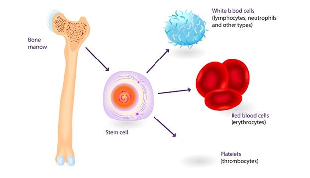 tế bào gốc ung thư là gì