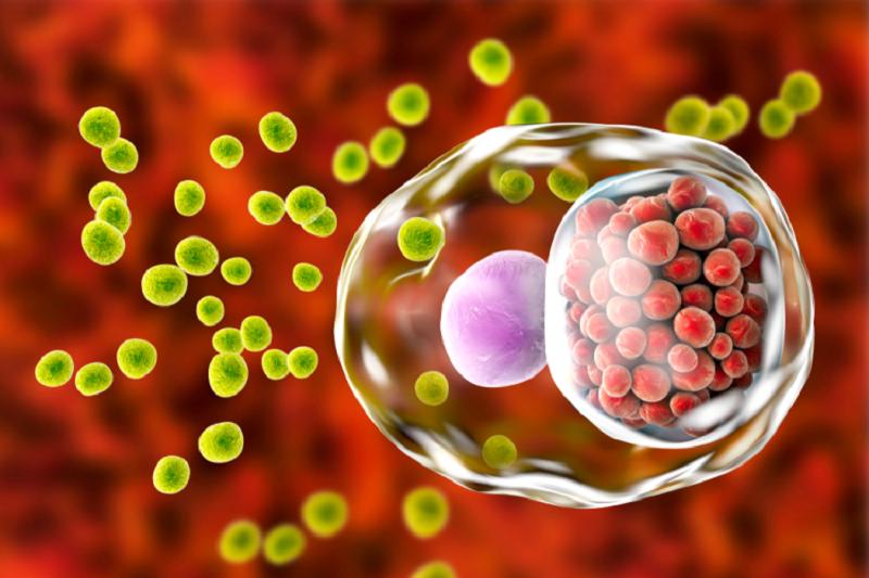 Vi khuẩn Chlamydia