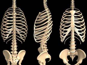 Làm thế nào để xương to lên?