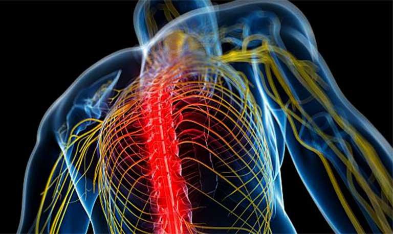 dây thần kinh con người