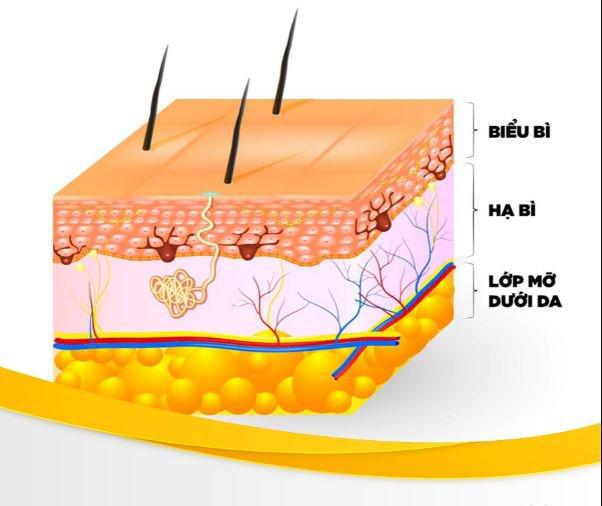 mô mỡ dưới da