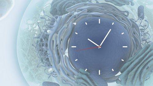 đồng hồ sinh học cơ thể