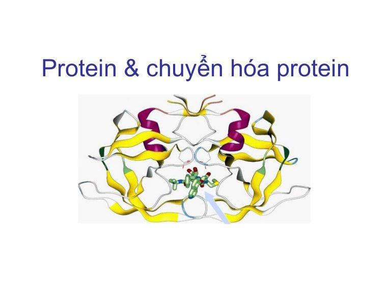 Sự chuyển hóa protein trong cơ thể