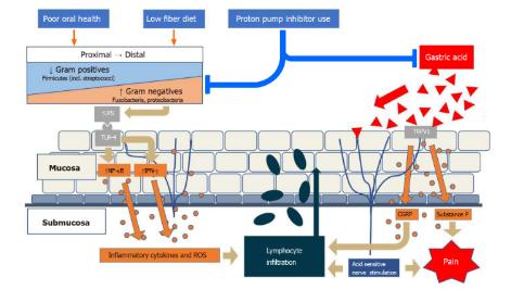 Các yếu tố môi trường làm thay đổi hệ vi sinh vật thực quản tại chỗ, thường có gradient từ gram dương đến gram âm, theo hướng tăng tỷ lệ gram âm.