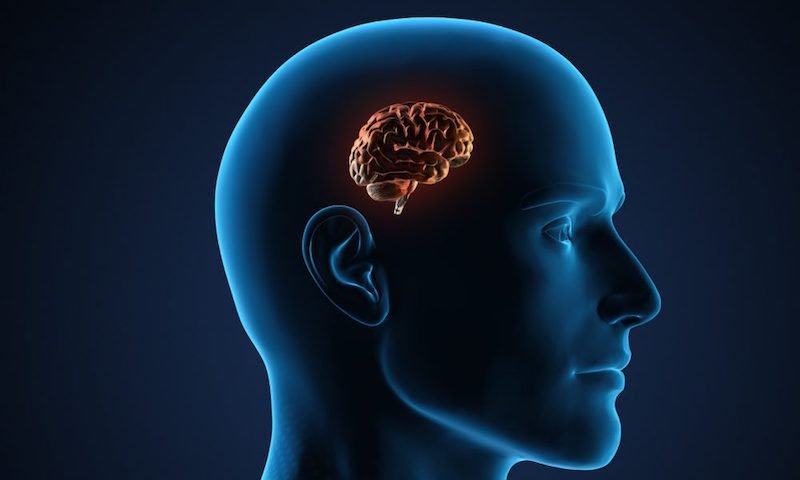 Bộ não, tiểu não, thân não kiểm soát chức năng nào của cơ thể?