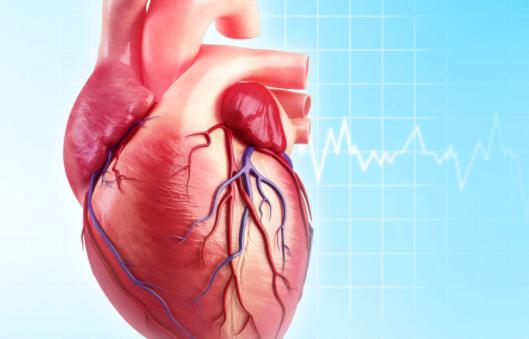 Các chức năng khác nhau của 4 van tim