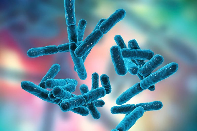 vai trò của probiotic