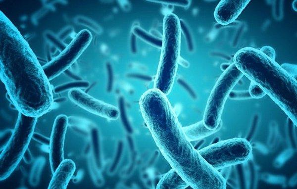 vi sinh vật đường ruột
