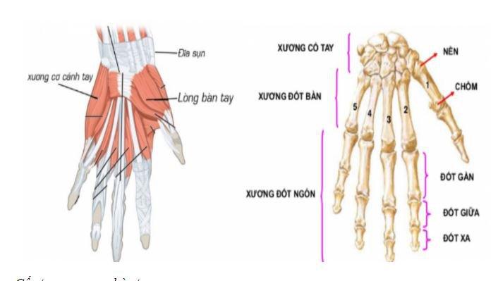 đau nhức tay trái