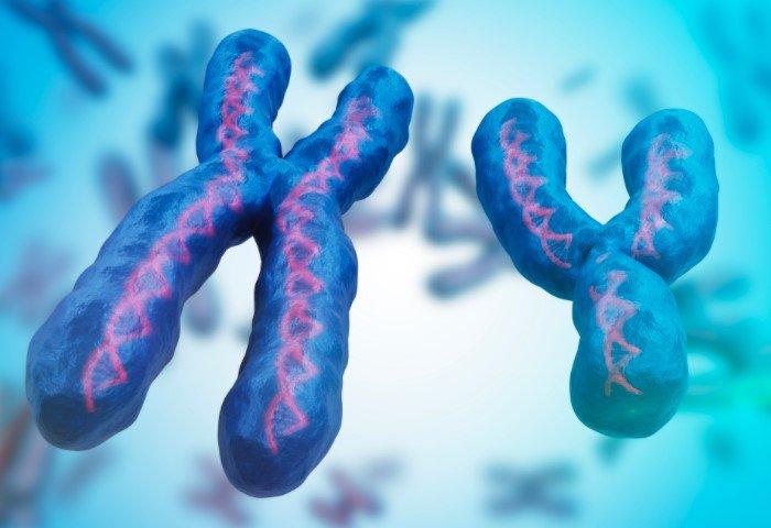 cấu trúc nhiễm sắc thể